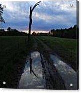 Sunset Treeflection Acrylic Print