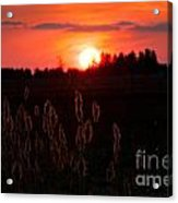 Sunset Wheat Field Acrylic Print
