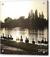 Sunset With Geese On The Thames Acrylic Print