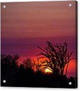 Sunset With Octopus Tree Acrylic Print