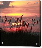 Sunset With Sea Oats Acrylic Print