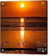 Sunset With The Birds Photo Acrylic Print