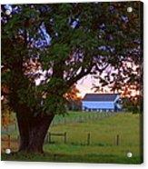 Sunset With Tree Acrylic Print