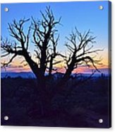 Sunset With Tree Silhouette Acrylic Print