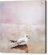 Sunset With Young Seagull Acrylic Print