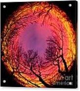 Sunset World Of Trees Acrylic Print