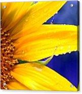 Sunshine Blue Acrylic Print