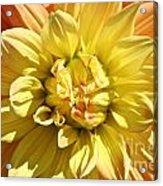 Sunshine Dahlia Acrylic Print