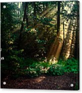 Sunshine Days Greeting Acrylic Print