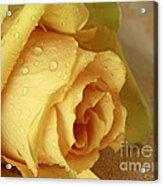 Sunshine Delight Yellow Rose Acrylic Print