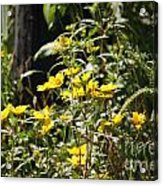 Sunshine Flower 3 Acrylic Print