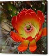 Sunshine Acrylic Print by Old Pueblo Photography