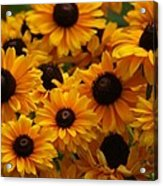 Sunshine On A Stem Acrylic Print