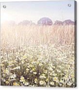 Sunshine Over The Fields Acrylic Print