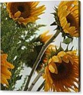 Sunshine Acrylic Print by Paula Rountree Bischoff
