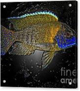 Sunshine Peacock 2 Acrylic Print