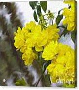 Sunshine Rose Acrylic Print