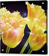 Sunshine Tulips Acrylic Print by Debra  Miller