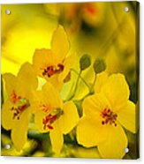 Sunshine Yellow Acrylic Print