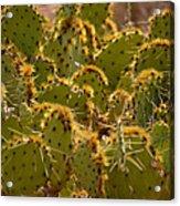 Super Cacti Acrylic Print