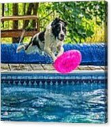 Super Dog 2 Acrylic Print