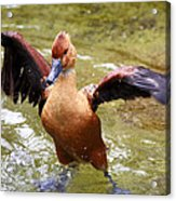 Super Duck Acrylic Print