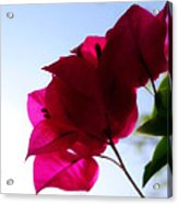 Super Red Flower Acrylic Print