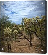 Superstitious Grounds Acrylic Print