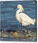 Surf Egret Acrylic Print