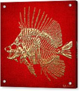 Surgeonfish Skeleton In Gold On Red  Acrylic Print