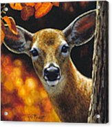 Whitetail Deer - Surprise Acrylic Print by Crista Forest