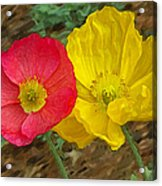 Surprised Poppies Acrylic Print