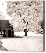 Surreal Dreamy Ethereal Winter White Sepia Infrared Nature Tree Landscape Acrylic Print