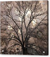 Surreal Fantasy Gothic South Carolina Sepia Oak Trees And Fantasy Bokeh Circles Acrylic Print by Kathy Fornal
