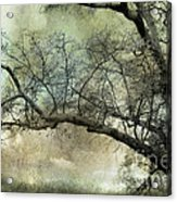 Surreal Gothic Dreamy Trees Nature Landscape Acrylic Print by Kathy Fornal
