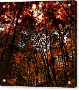 Surrounded By Autumn Acrylic Print