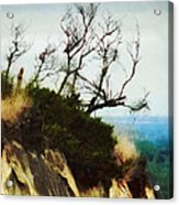 Surviving On The Cliff Top  Acrylic Print