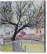Survivor Tree Acrylic Print