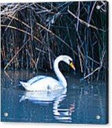 Suwannee River Acrylic Print