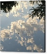 Swallow Reflection Acrylic Print