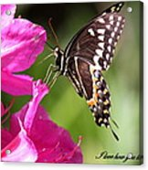 Swallowtail And Azalea - Love Acrylic Print