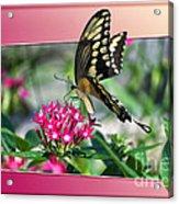 Swallowtail Butterfly 02 Acrylic Print