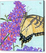 Swallowtail Butterfly And Butterfly Bush Acrylic Print