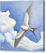 Swallowtail Kite Acrylic Print by Wayne Hardee