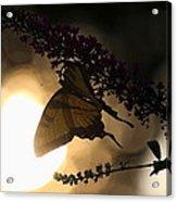 Swallowtail Light Acrylic Print