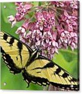 Swallowtail Notecard Acrylic Print