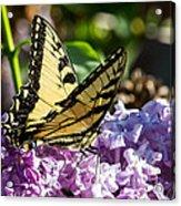 Swallowtail On Lilac Acrylic Print