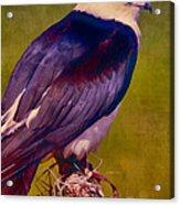 Swallowtail Pose Acrylic Print