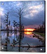 Swamp At Dusk Acrylic Print