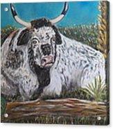 Swamp Bull Acrylic Print by Richard Goohs